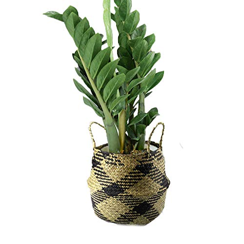 Szetosy natürlicher Seegrass-Korb – Goodchanceuk Beuteltasche mit Griff
